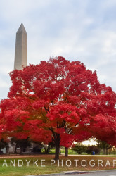 Autumn Landmark Washington Monument Washington DC
