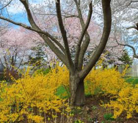 Spring Colors Meadowlark Gardens