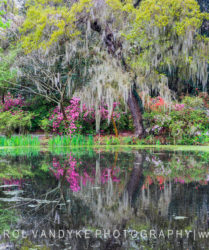 Magnolia Plantation swamp water reflections spring