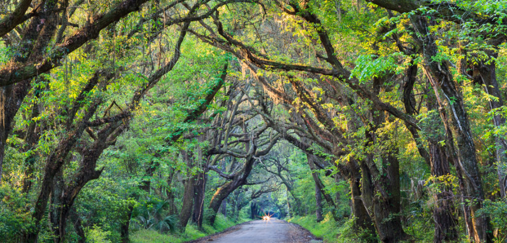 oak trees arched tunnel low-country Edisto Island Botany Bay South Carolina