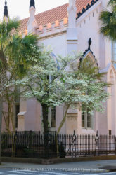 Charleston Church with Flowering Dogwood Tree