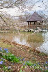 Meadowlark, Spring, Cherry Blossoms, lake, gazebo