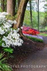 spring, garden path, Meadowlark,