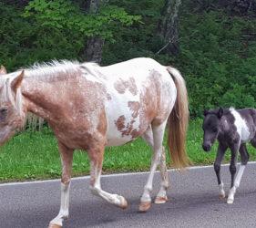 wild pony, colt, newborn