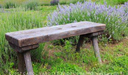 Seven Oaks Lavender Farm