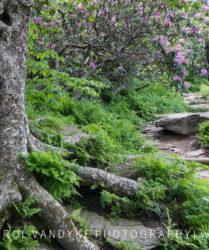Craggy Pinnacle Trail, Asheville, North Carolina