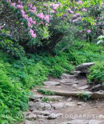 Craggy Pinnacle Trail, Asheville NC,