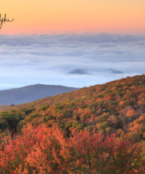 sunrise, fog, autumn, foliage