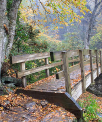 Tanawha Trail Bridge NC